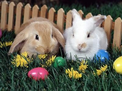 dallas-and-fort-worth-easter-egg-hunts-and-brunches-2011